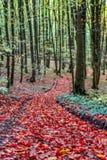 惊人的秋天Forrest。 图库摄影