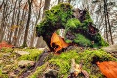 惊人的秋天Forrest 免版税库存图片