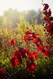 惊人的精采明亮的红色叶子 库存照片