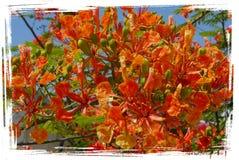 惊人的红色开花和平与爱情花卉热带 免版税库存图片