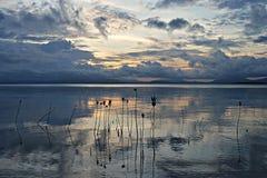 惊人的美洲红树植物在日落期间的海在海岛Pamilacan附近 免版税库存照片