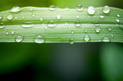 惊人的金刚石小滴小滴绿色叶子离开象查找较大水 免版税图库摄影