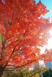 惊人的颜色秋天 免版税图库摄影