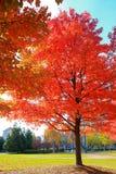 惊人的颜色秋天 免版税库存照片