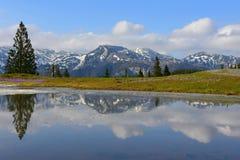 惊人的风景斯洛文尼亚Spring湖 免版税库存图片