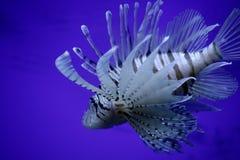 惊人的鱼 库存照片