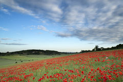 惊人的鸦片领域风景在夏天日落天空下 免版税库存图片