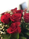 惊人红色Valentine's天玫瑰 免版税库存图片