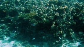 惊奇在水下的生活下水英尺长度的4k在珊瑚rees附近 美好的海景在红海 股票录像