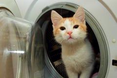 惊奇地好奇姜的小猫 库存照片