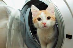 惊奇地好奇姜的小猫 免版税库存图片