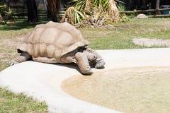 100惊奇比事情安排他的i寿命被看见的许多老认为草龟非常年 库存图片
