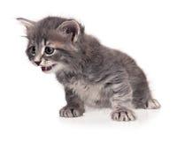 惊奇的小猫 库存图片