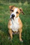 惊奇的狗坐绿草户外 免版税图库摄影