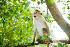 惊奇的猴子 免版税图库摄影