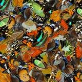 惊奇背景由pilling在dif的五颜六色的蝴蝶制成 免版税图库摄影