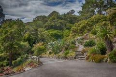 惠灵顿植物园,新西兰 库存照片