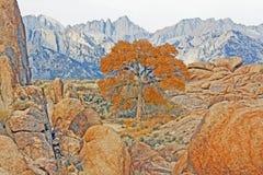 惠特尼山脉和结构树 免版税库存图片