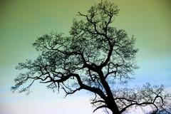 幻想反对绿色天空的被迷惑的树剪影 图库摄影
