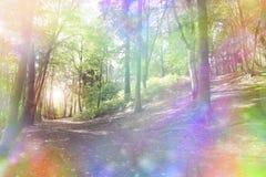 幻想彩虹bokeh森林地 库存图片