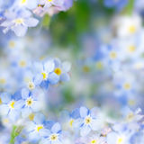 幻想柔和的春天背景/Defocused蓝色的花 免版税库存照片
