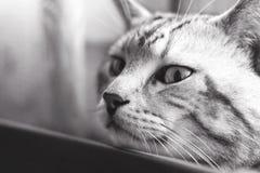 幻想猫画象,黑白 库存图片