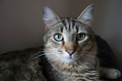 想知道的猫2 库存照片