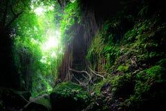 幻想神秘的生苔森林自然 印度尼西亚 免版税库存图片