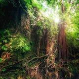 幻想神秘的生苔森林自然 印度尼西亚 免版税图库摄影