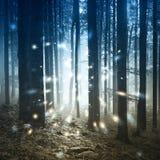 幻想萤火虫光在有雾的森林里 免版税库存照片
