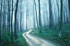 幻想蓝绿色有雾的森林公路 免版税库存图片