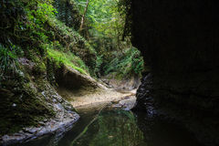 想象被形成的山河峡谷在心脏的狂放greenforest 免版税库存照片