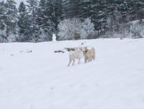 愉快两条的狗互相看在冬天公园 免版税库存图片