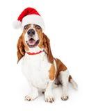 愉快和微笑的圣诞老人狗 免版税库存照片