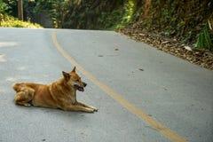 愉快地说谎在沿绿色森林山的灰色柏油路的浅褐色的微笑的地方狗 库存照片