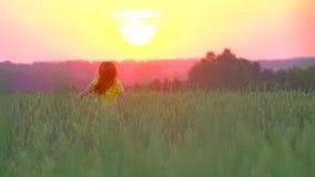愉快地跑通过金黄麦子的领域的一个女孩在日落,慢动作 跑在黄色麦子的秀丽女孩 影视素材