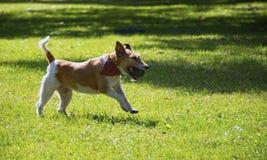 愉快球的狗 免版税库存图片