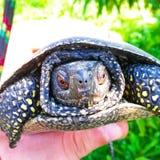 愉快的乌龟 免版税库存图片