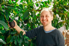 愉快的人在他的显示一个成熟鲕梨的庭院里 库存图片