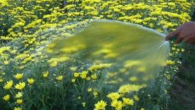 愉快的人浇灌的花和植物 股票视频