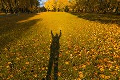 愉快的人的阴影明亮的下落的叶子的在晴朗的天气的秋天森林里 秋天槭树 黄色自然背景 免版税库存图片
