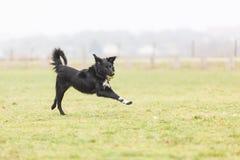 愉快的使用的狗 免版税库存图片