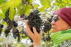 愉快的农夫用葡萄果子 免版税图库摄影