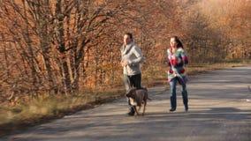 愉快的加上跑在秋天公园的狗 股票视频