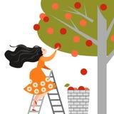 愉快的动画片女孩在庭院里摘苹果 苹果庭院地面收获成熟时间结构树 成功的符号图象 向量例证