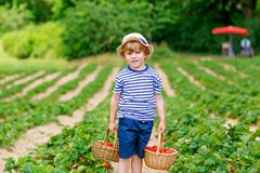 愉快的可爱的小孩男孩采摘和吃草莓在有机莓果生物农场在夏天,在温暖的晴天 免版税库存照片