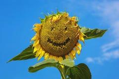 愉快的向日葵微笑的面孔 免版税库存图片
