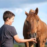 愉快的喂小孩一匹饥饿的棕色马 免版税库存图片