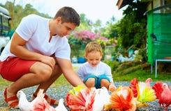 愉快的喂养在动物农场的父亲和儿子五颜六色的鸽子 免版税库存照片
