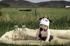 愉快的嚼的母牛婴孩 免版税库存图片